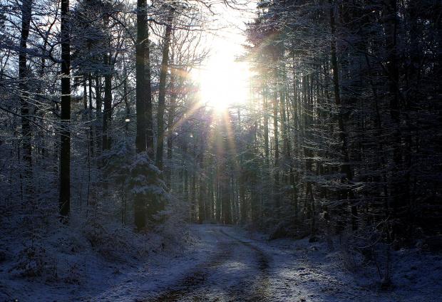 W promieniach zimowego słońca