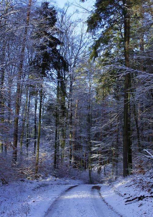W zimowej scenerii