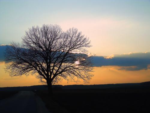 """,,Wiosna przy drodze"""""""