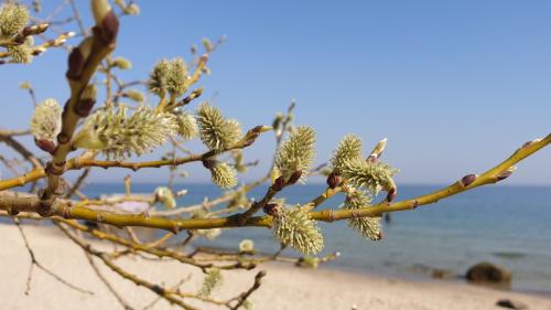 Wiosennie nad morzem