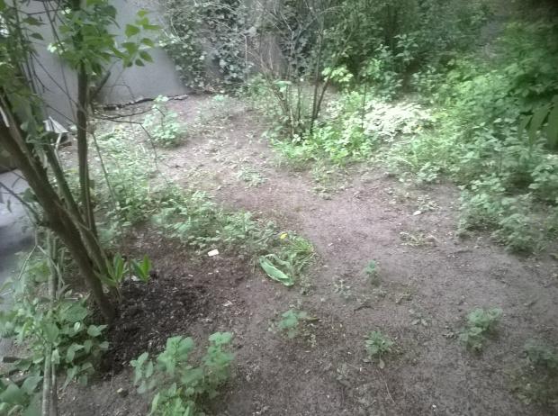 1 Ogródek podwórkowy