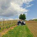 www.winnica-dolinasanu.pl, #winnicadolinasanu, #sanok, #winnica, #podkarpackie, Podkarpacie, #winnica w Sanoku, #podkarpacki szlak winnic, #winnica na Podkarpaciu, #polskie wino, #wino z Podkarpacia, #WinnicaDolinaSanu#sanok#winnica #podparp