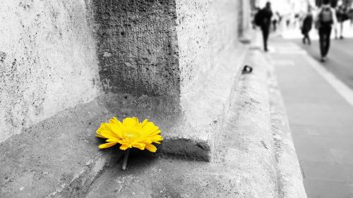 Pstryk Codzienny - żółty rulez
