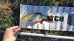 images89.fotosik.pl/190/61366b60cc2a7934m.jpg