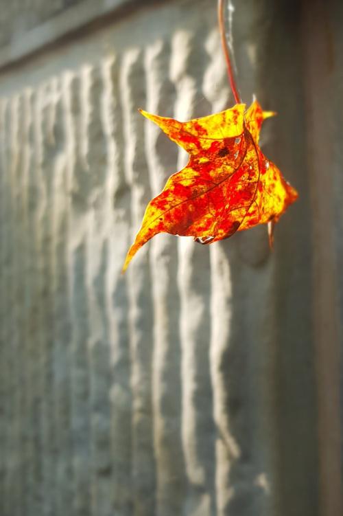 Pstryk codzienny - żółty jesienny liść, tyle mi odpowiedział... https://youtu.be/wtbkNMHrzEc