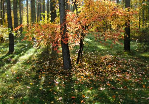 Krótki leśny spacerek