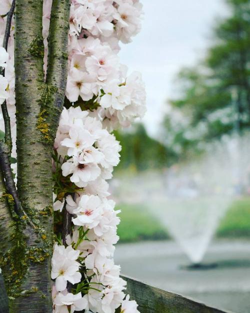 Taka piękna wiosna była ;)