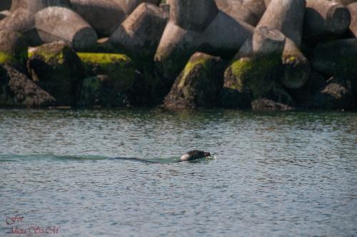 Seebänke,Kolonia Fok na Polnocnym Morzu #helgoland #koloniafok seebänke #foki #zwierzeta