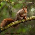 wiewiorka na deszczu...:( #wiewiork #zwierzeta #przyroda #ogrody #jesien