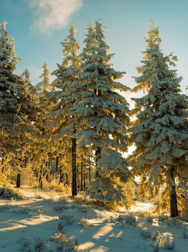 Zima w promieniach słońca
