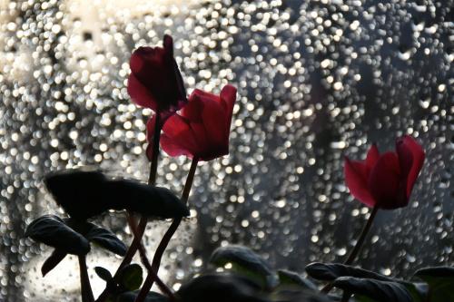 gdy za oknem deszcz