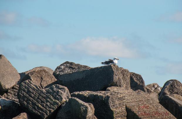 Kolonia Fok(Seehundebänke) przy Helgoland -ptaki rowniez tam mieszkaja.. #helgoland #morze #wyspy #foki #zwierzeta #seehunde