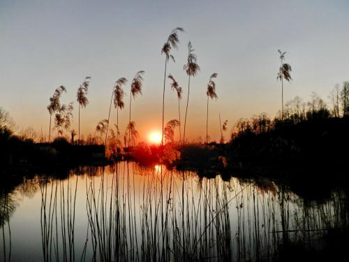 Zachód słońca w 'moim' stawie