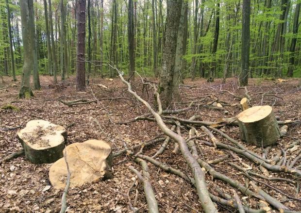 Jak to było? Im dalej w las, tym... mniej drzew?