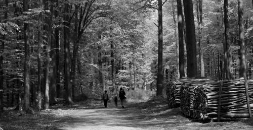 Spacer między drzewami... Odsłona majowa.