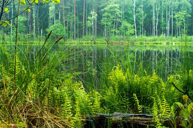 jeziorko leśne v2