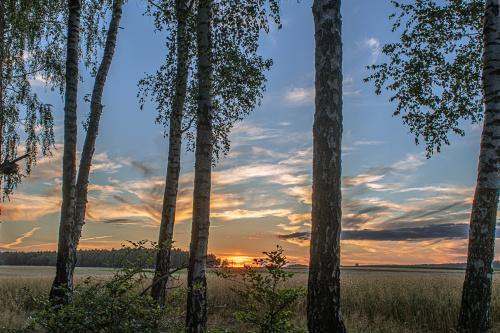 zachód słońca na skraju lasu