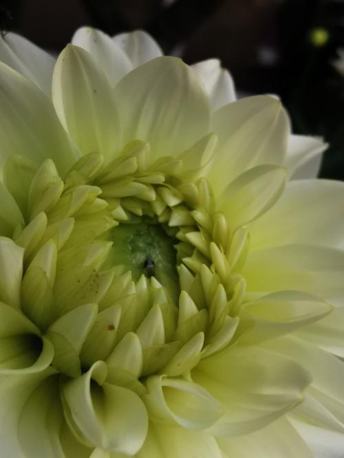 #kawiaty #natura #macro #macrophotography #flowers #nature