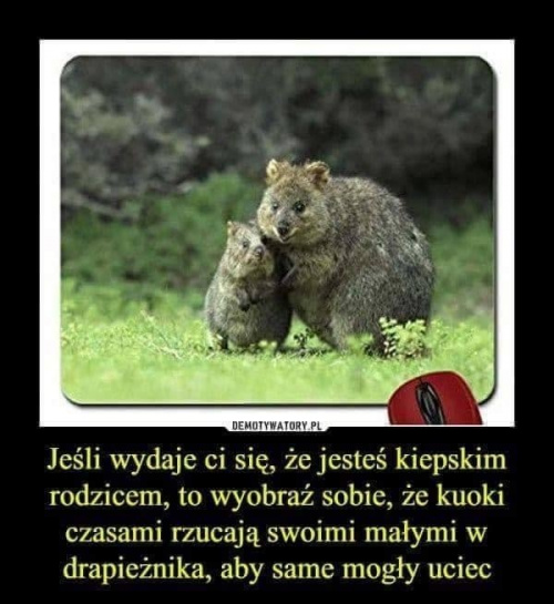 https://images89.fotosik.pl/420/24f94e5a72dd5187med.jpg