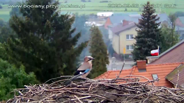 www.bociany.przygodzice.pl