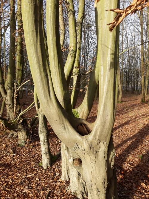 Krzywe drzewa