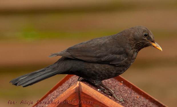 tych jest troche wiecej .. #ptaki