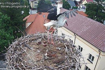 Ptaki online