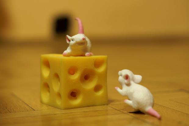 Myszy grasują.